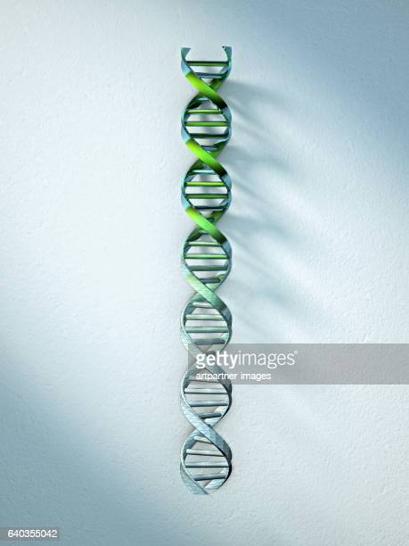 DNA Structure, Double Helix
