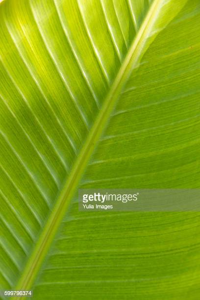 Structure of a fresh green palm frond