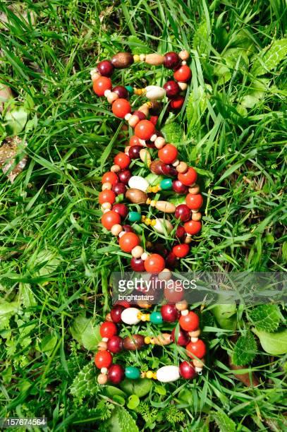 structure ADN sur gazon vert