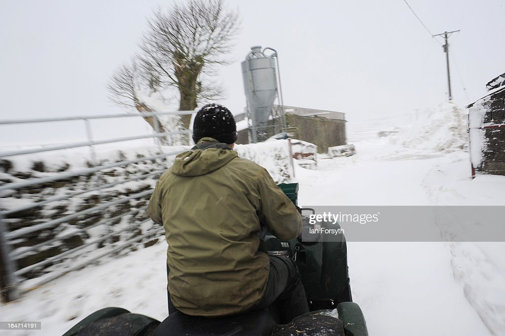 Stuart Buckle, 23, rides on a quadbike to give his sheep their morning feed on his farm in the hamlet of Barras during heavy snow on March 27, 2013 near Kirkby Stephen, Cumbria, England. Stuart, 23, runs Bleathgill Farm with his father Wilf and as heavy snow continues to fall, extra effort is needed to look after and protect their Swaledale sheep from the cold. Across the UK, farmers are battling to save livestock after heavy snow and freezing temperatures has left thousands of sheep and cattle stuck in the fields with no access to food and fresh water.