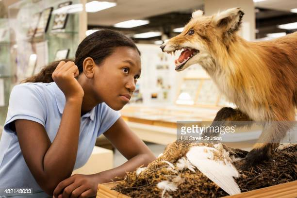 Student examining stuffed fox in museum