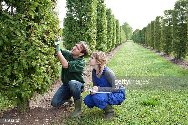 Student learn about pruning from an experienced instructor.