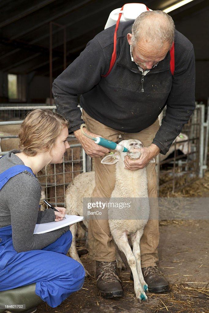 Student making notes. Learning for vet