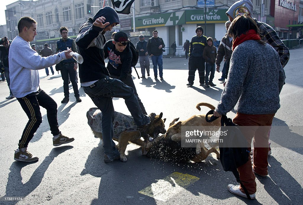 Students intervene to stop a stray dogs fight during a demonstration against the government of Chilean President Sebastian Pinera in Santiago on July 11, 2013 in Santiago. Since the beginning of the massive marchs of students protesting against the education system in 2011, scores of stray dogs happily participate in all the clashes with riot police, playing under the jets of the water cannons and accompanying the students whilst they are chased by police. In Santiago there are about 500,000 stray dogs, according to municipal authorities. AFP PHOTO MARTIN BERNETTI