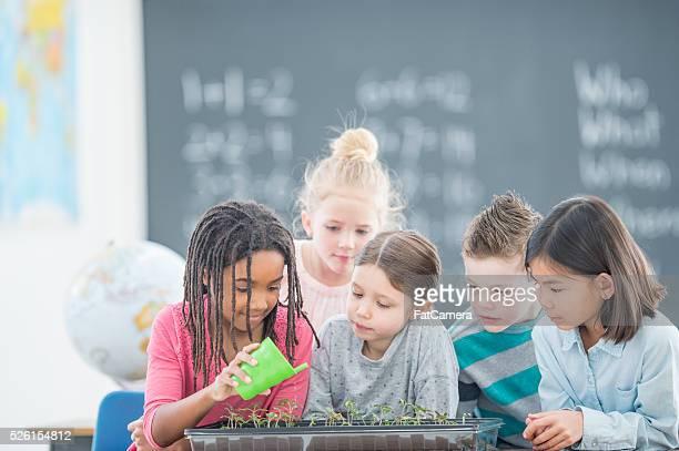 Étudiants eau les plantes