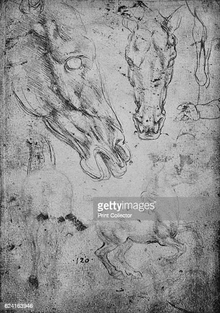 Studies of Horses and of Horses' Heads' c1480 From The Drawings of Leonardo da Vinci [Reynal Hitchcock New York 1945] Artist Leonardo da Vinci