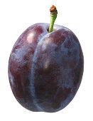 single whole purple prune