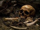 Studio setup still life visual art of skulls and skeletons bones found in graves yard