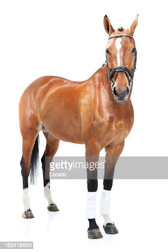 studio shoot of horse