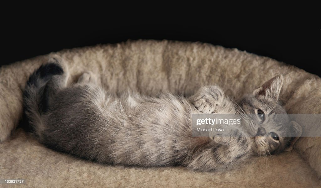 studio shot of a cat on a black background, : Stock Photo