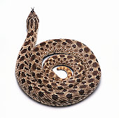 Studio Shot of a Curled Up Snake
