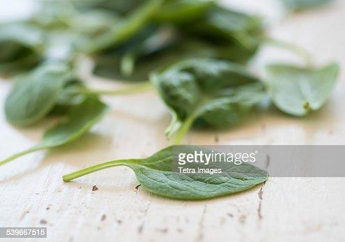 Studio shot of baby spinach