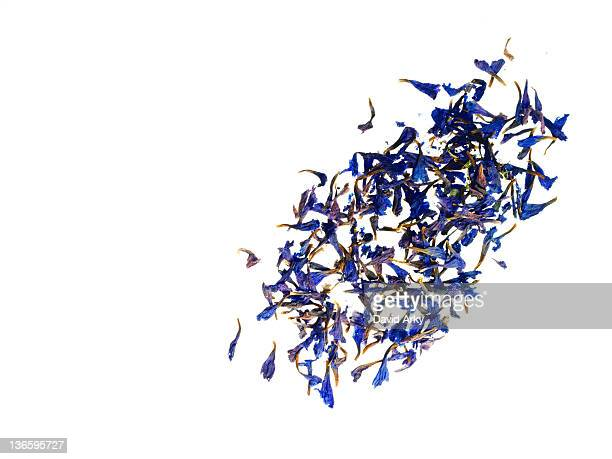 Studio shot of bergamot petals