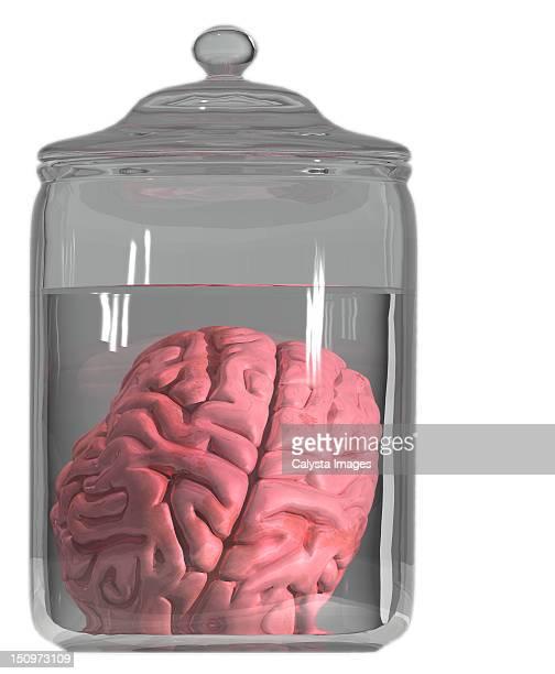 Formaldehyde Brain Formaldehyde Stock Pho...