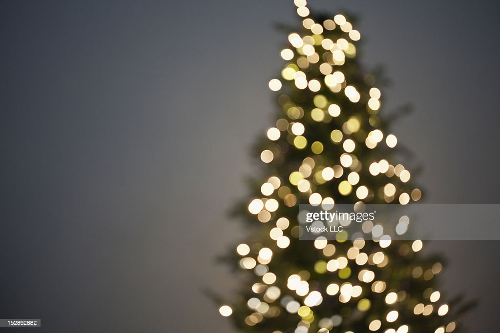 Studio shot of christmas tree, out of focus