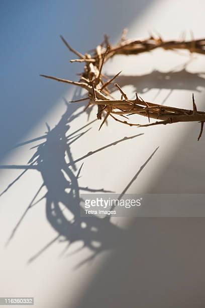 Studio shot of crown of thorns