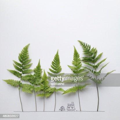 Studio shot of ferns