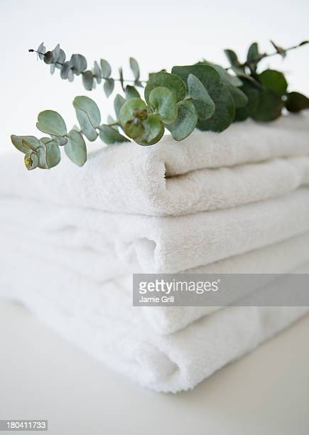 Studio Shot of folded towels and eucalyptus on top