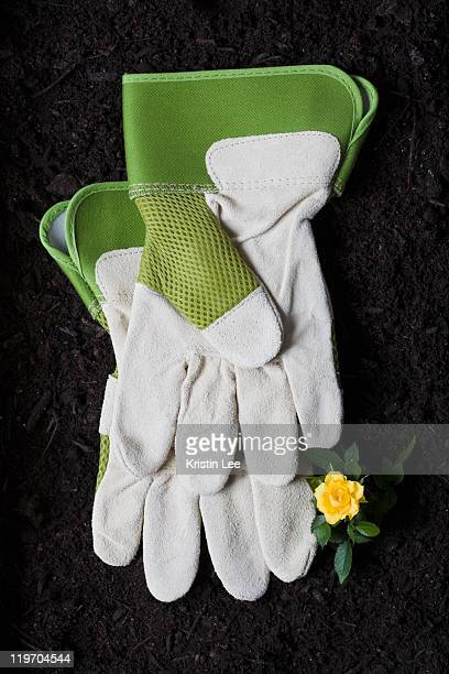 Gardening Glove Stock Photos and Pictures Getty Images