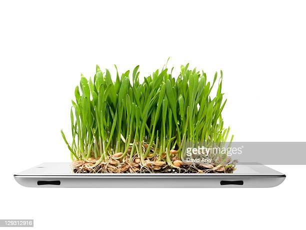Studio shot of grass growing on digital tablet