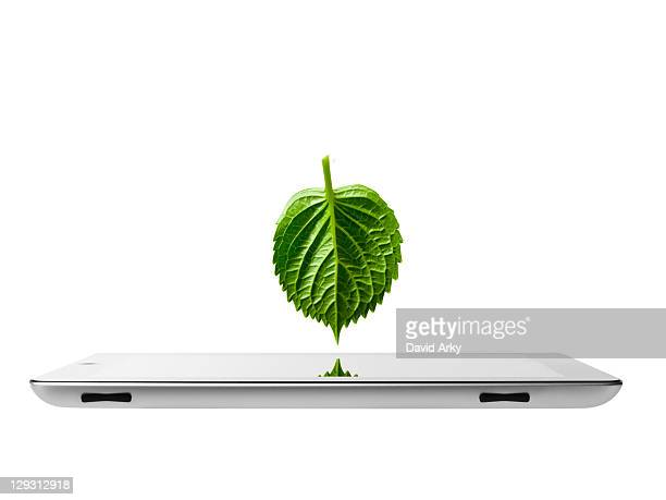 Studio shot of leaf over digital tablet