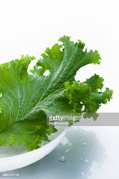 Studio shot of lettuce leaf