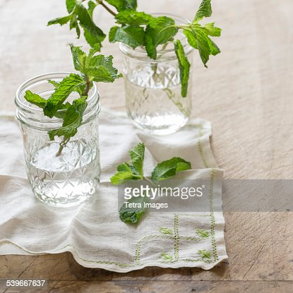 Studio shot of mint leaves