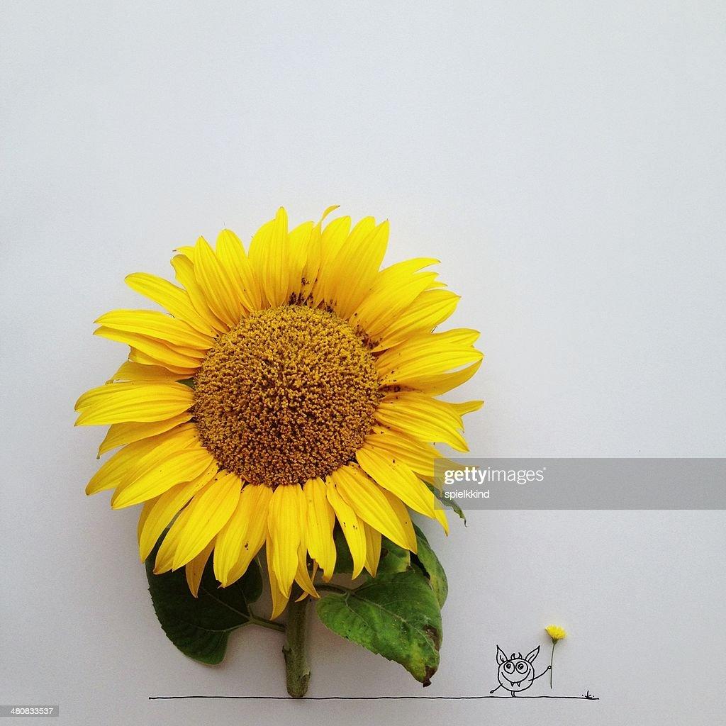 Studio shot of monster and sunflower