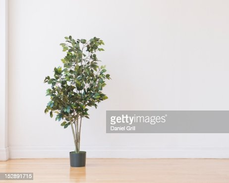 Studio shot of potted plant