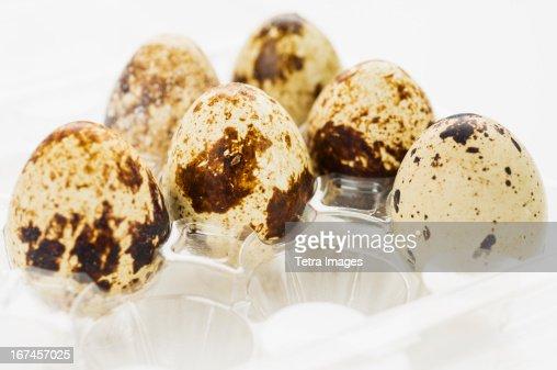 Studio shot of quail eggs : Stock Photo