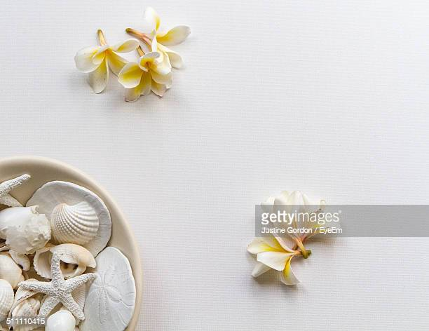Studio shot of sea shells and frangipani flowers on white background