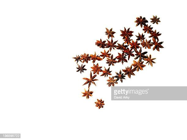 Studio shot of star anise
