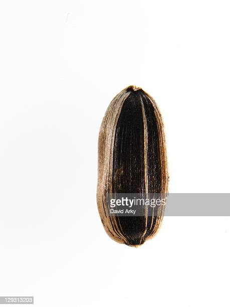 Studio shot of Sunflower Seed on white background