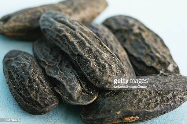 Studio shot of Tonka beans closeup Tonka beans contain coumarin an anticoagulant which can be lethal in large doses Many anticoagulant prescription...