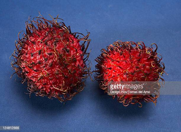 Studio shot of two rambutan.