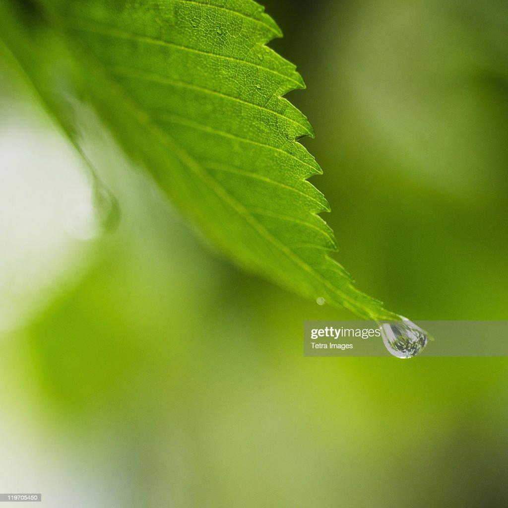 Studio shot of water drop on leaf