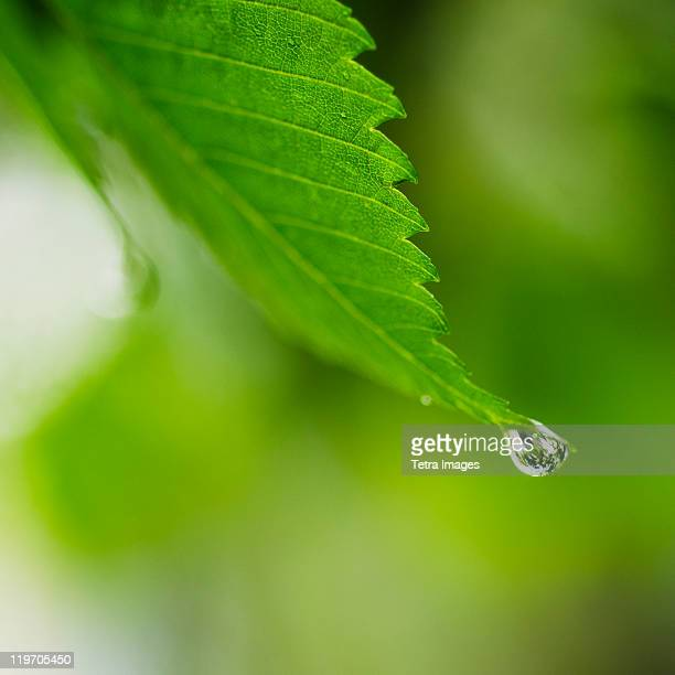 Studio shot of water drop on leaf