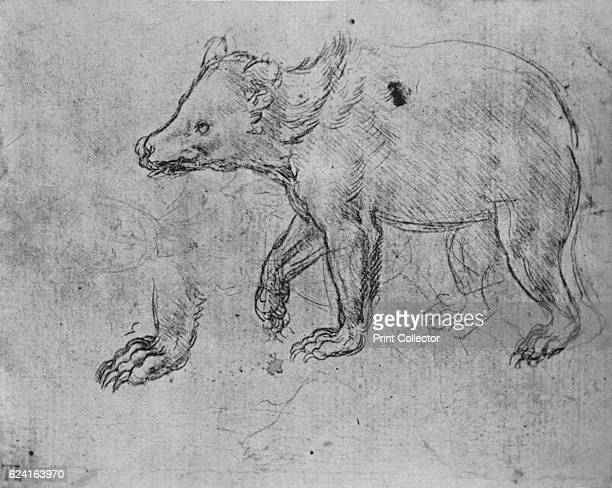 Study of a Bear' c1480 From The Drawings of Leonardo da Vinci [Reynal Hitchcock New York 1945] Artist Leonardo da Vinci