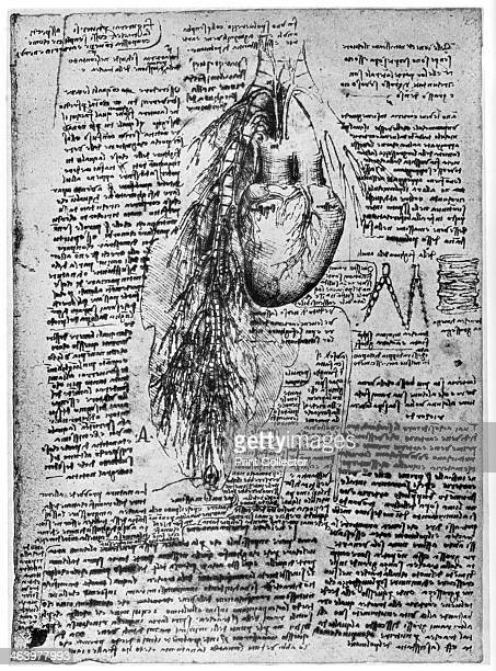 Study of the heart and the bronchial arteries late 15th or early 16th century Found in the collection of the Royal Library Windsor Castle Windsor A...