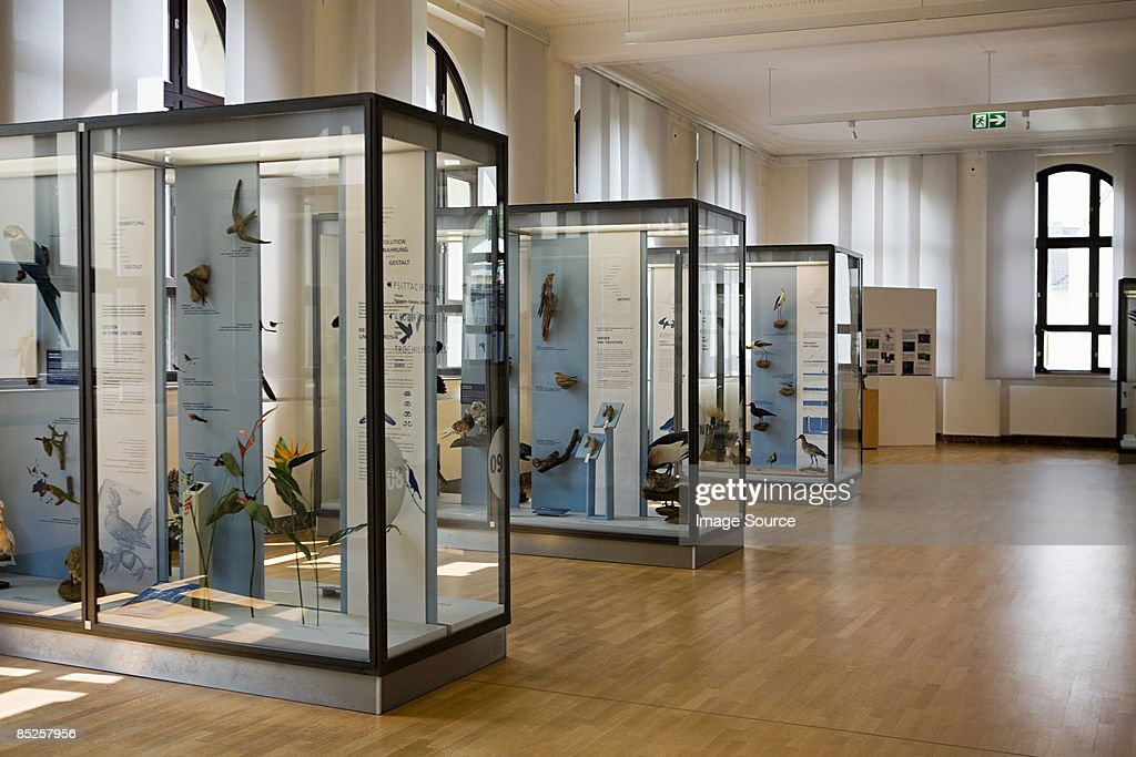 Stuffed birds in a museum : Stock Photo
