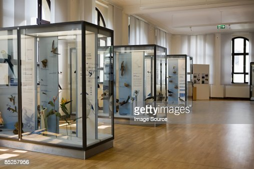 Stuffed birds in a museum : Stock Photo