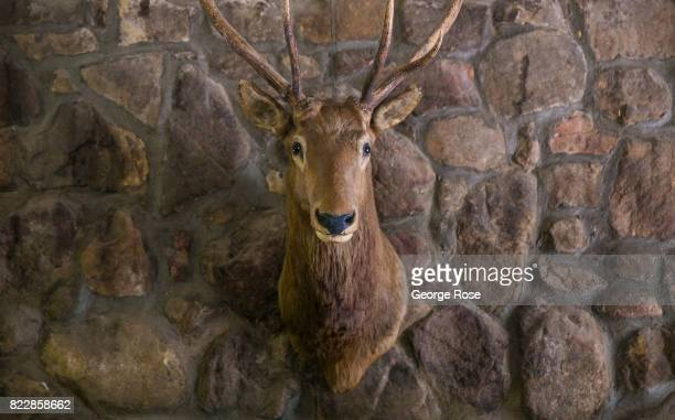 A stuffed deer hangs over the clubhouse fireplace at Rancho Oso Resort in Santa Barbara County's backcountry on May 13 near Santa Ynez California...