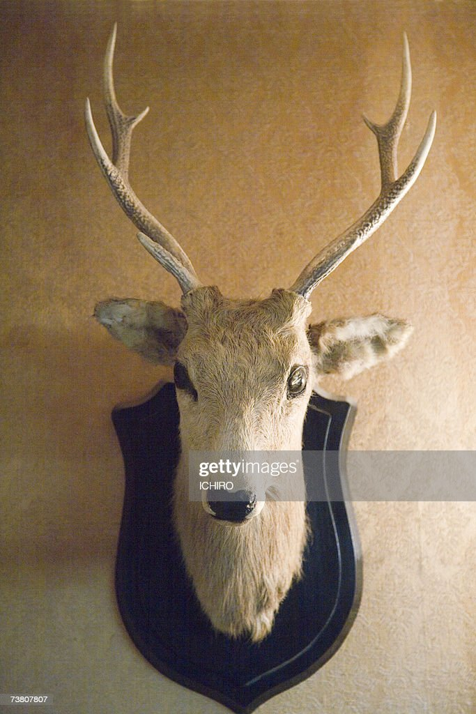 Stuffed deer head hanging on wall