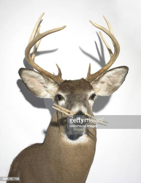 Stuffed Deer With Clothespins on Nose