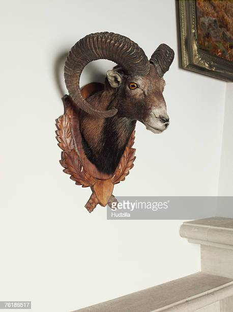 A stuffed goat's head on a wall