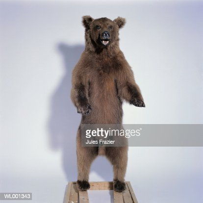 Stuffed Grizzly Bear