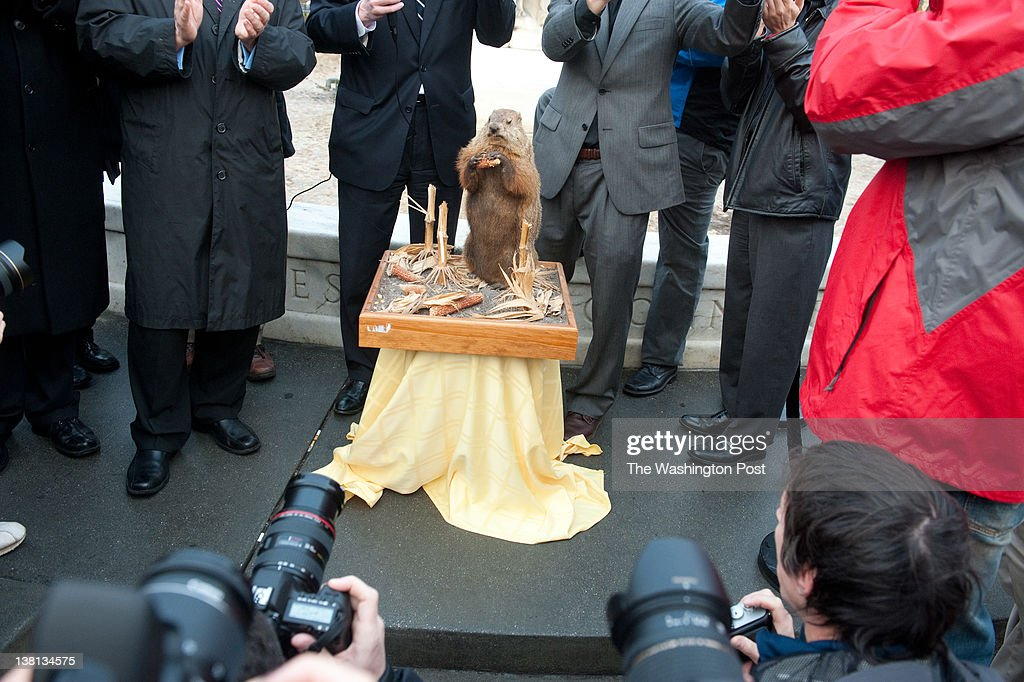 A stuffed groundhog, 'Potomac Phil', predicted six more weeks of winter during Washington DC's first annual groundhog day celebration in Dupont Circle. Ward 2 councilman Jack Evans and other local politicians were in attendance.