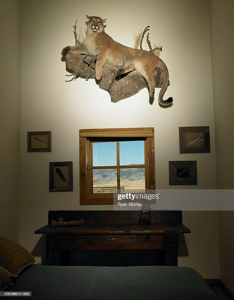 Stuffed mountain lion hanging on wall in bedroom