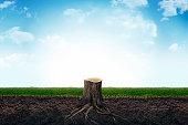 stump, grass, meadow