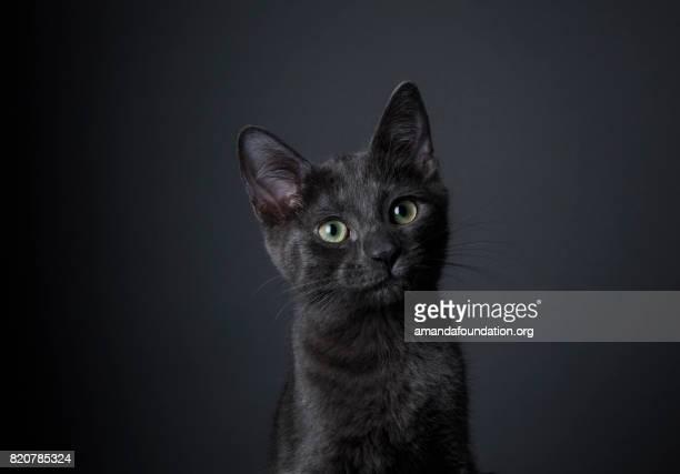 Superbe chaton noir